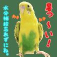 yuzunichi vol.02