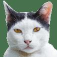 Cat Lumpini park