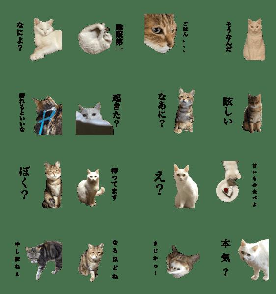 「猫猫キャット」のLINEスタンプ一覧