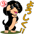 Daily greetings of miniature dachshund 9