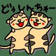 Taigers Cat Toto and Rara in Okinawa