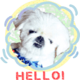 Pekingese dog Ten's sticker