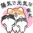 Cheerful and energetic Shiba Inu