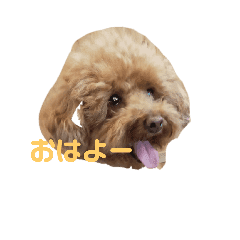 食いしん坊犬