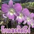 orchids thai3