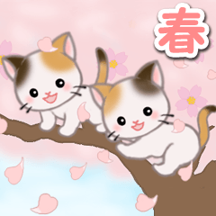 Twin calico kittens in spring