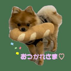 ポメラニアン toy♡
