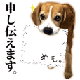 beagle , honorific , expression language