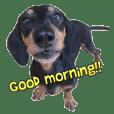 Happy Dog SHELI