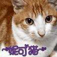 妮可貓 - 真實版