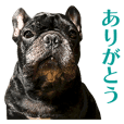 frenchbulldog's TOYkun 12
