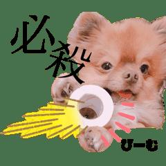土佐弁♡日常編♡ポメラニアン♡