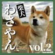 わさやん(柴犬)vol.2