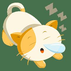Kin-chan The Munchkin cat