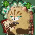Friendry cats - Ugly cute / shy boy!