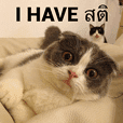 Cat Lovers V2