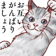 リアルな猫のリアルな日常3