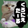 新宮弁LINEスタンプ 猫編 ~パート2~