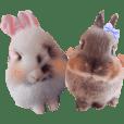 fluffy girls Runa Lilly