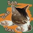 Mili Si Kucing