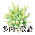Succulents Photo Sticker