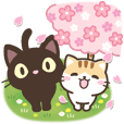 black cat and calico cat[spring]