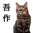 Ex-stray cat Gosaku Sticker