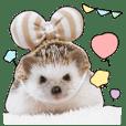 Hedgehog's ellie&cheri