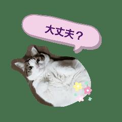 佐藤家のネコ 黒のと白いの
