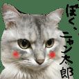 イケメン猫!ぼく、ニャン太郎