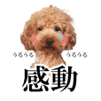 Toy poodle Aloha's stickers ver.2