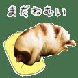 funny cute cat2