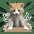 猫の『いなり』写真スタンプ