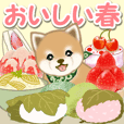 Puppy of Mameshiba with spring food