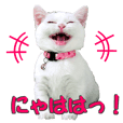 Munchkin Cats sticker!