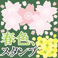 Cherry blossoms! Spring full bloom