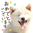 Honorifics of dogs and cats sticker No.2