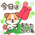 Cheerful and cute Jack Russell Terrier4