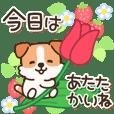 陽気なジャックわんこ4(春)