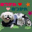 Real DOG White Pekeinges -PONPOKO-