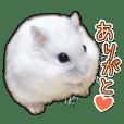 Djungarian hamster -Daifuku- Photo ver.3
