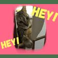 Cat Kijitora
