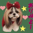 Real DOG Shih Tzu -Azuki & Yomogi-