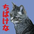 猫のはるあき(岡山弁)