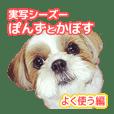 シーズー犬ぽんずとかぼす【よく使う編】