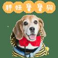 Beagle's Life
