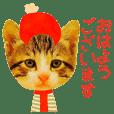 Cat Keigo, Honorifics used by adults.