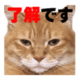 Daily Sticker of Tora