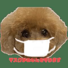 コロナ対策 マスク プードル