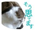 Sticker of a cute rabbit chacha 2